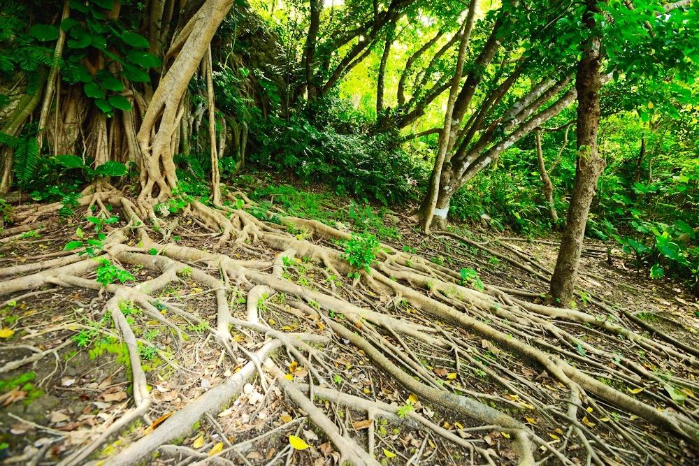 海坐HP_forest1-1