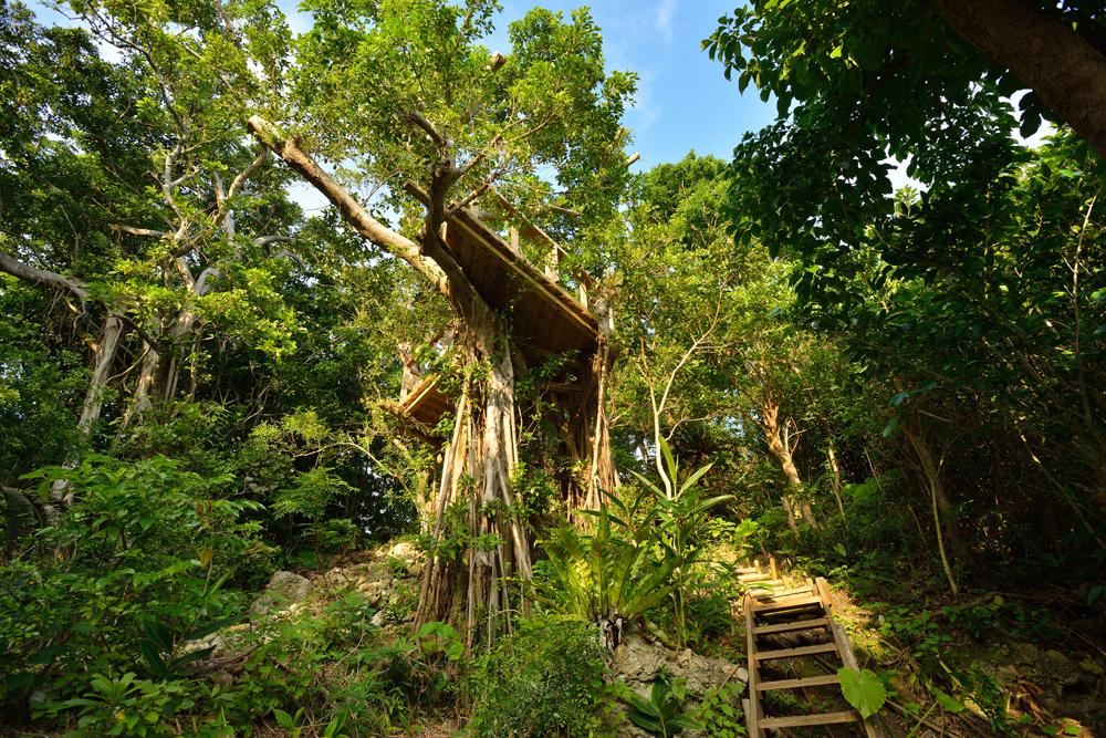 海坐HP_treeterrace2